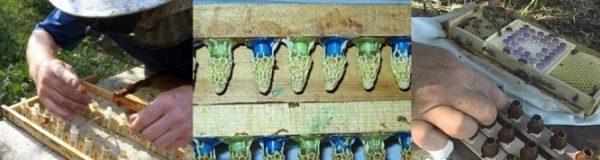 Ротационное разведение пчел