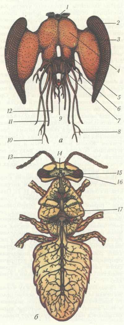 Нервная система пчелы